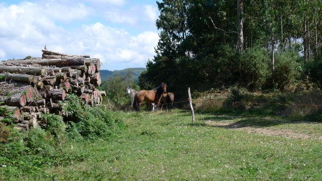 O Vicedo (Galicia)