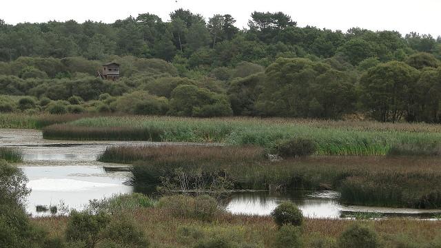 Cospeito (Galicia)