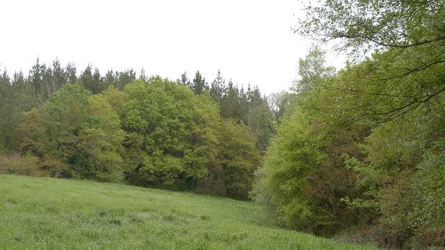 Becerreá (Galicia)