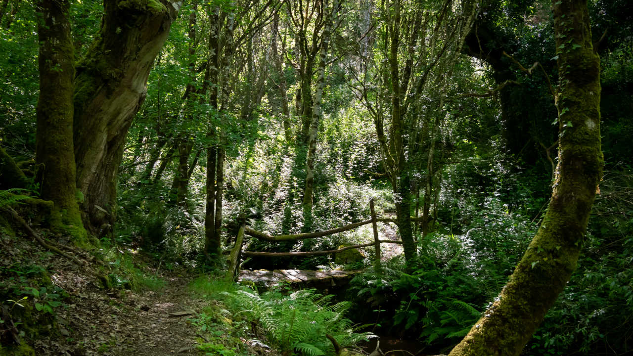 Ruta da Marronda-Alto Eo